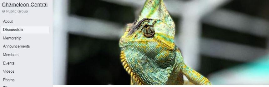 Chameleon Central.JPG
